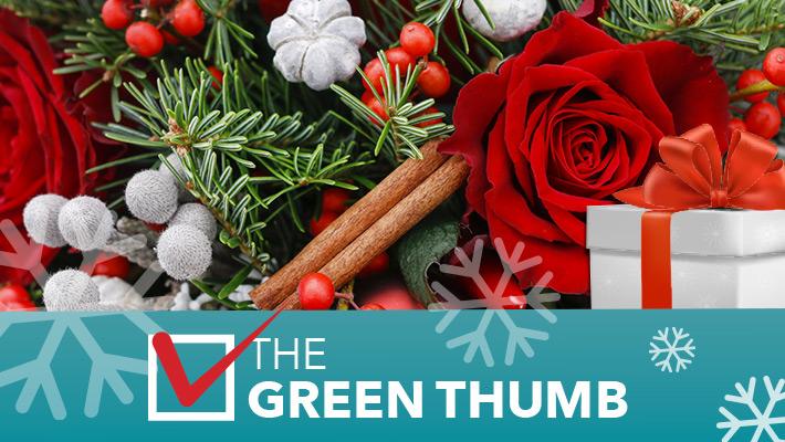 2020 TOP GIFT IDEA - The Green Thumb